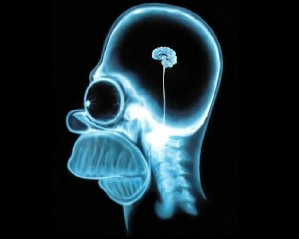 homer-simpson-wallpaper-brain